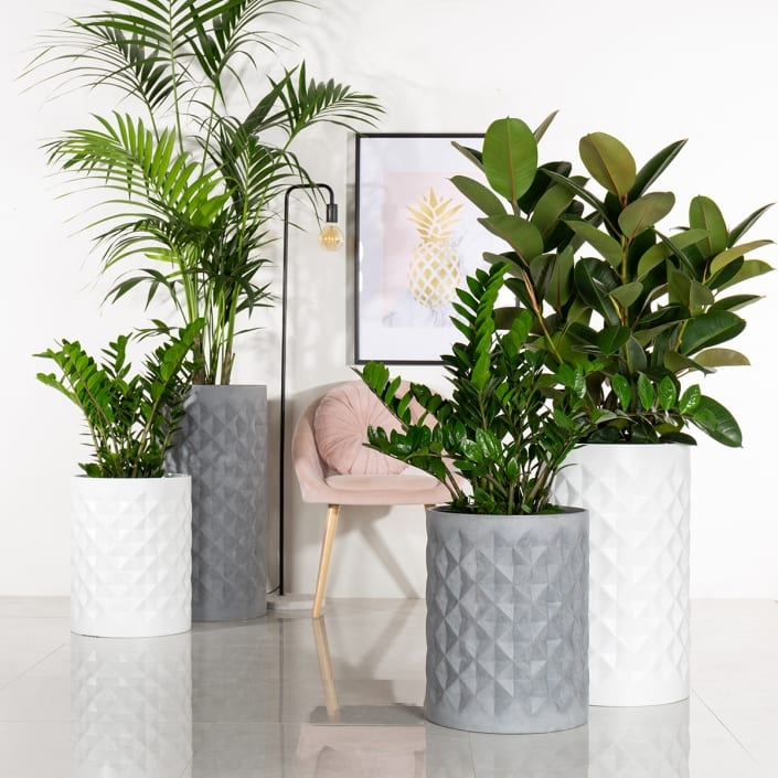 Just Add Plants - Inspiration
