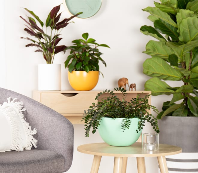 Just Add Plants - About Our Planters
