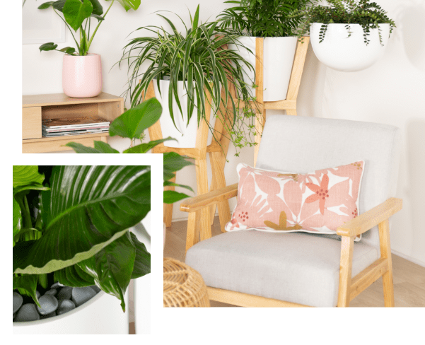 Just Add Plants - Home